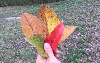 秋色の葉っぱで染めました
